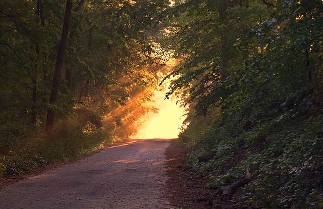sunlight streaming through trees on a path